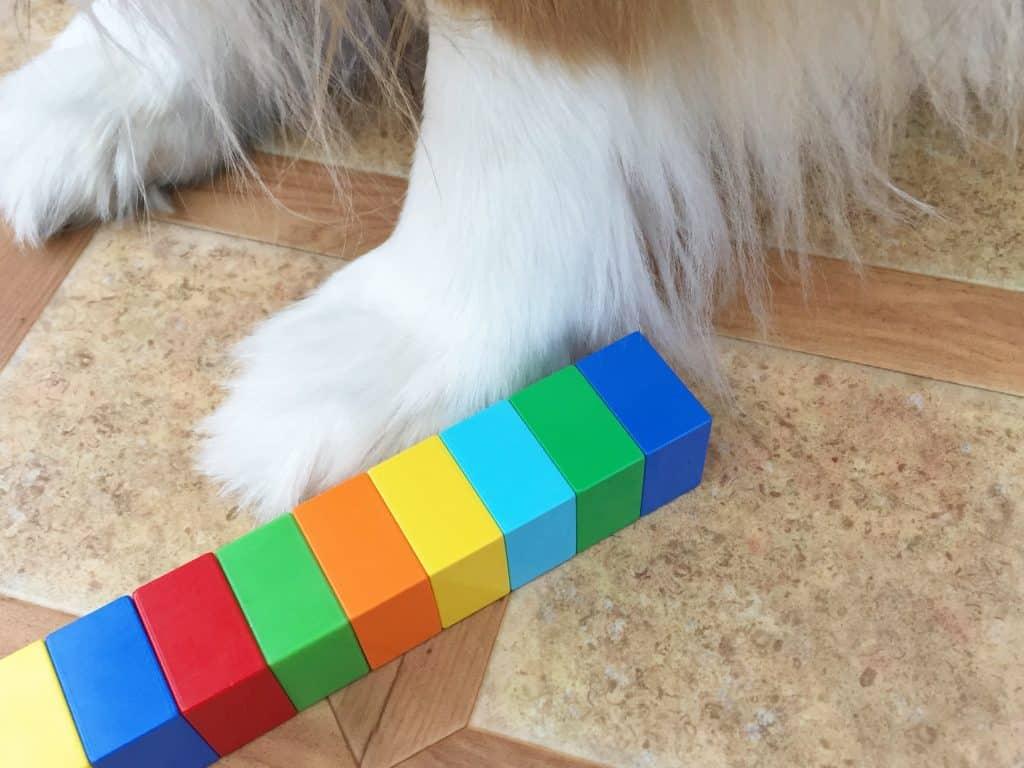 MEASURING DOG FOOT
